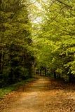 Route dans la forêt, Niedzica, Pologne Images libres de droits
