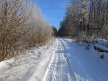 Route dans la forêt profonde photo stock