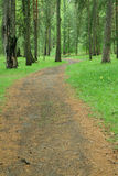 Route dans la forêt sauvage Finlande Photographie stock libre de droits