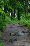 Route dans la forêt verte Photos libres de droits
