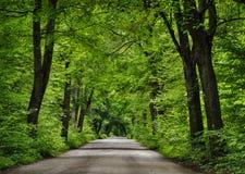 Route dans la forêt verte Photo stock