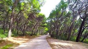Route dans la forêt - vue de dashcam banque de vidéos