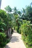 Route dans la jungle images stock