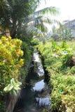 Route dans la jungle photo stock