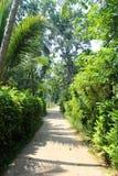 Route dans la jungle image stock