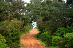 Route dans la jungle images libres de droits