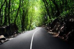 Route dans la jungle Image libre de droits