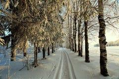 Route dans la neige de paysage de forêt d'hiver Photographie stock