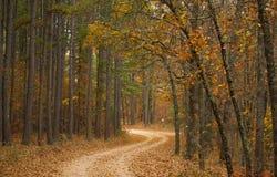 Route dans la plantation de woods Images stock