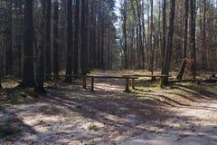 Route dans la for?t image stock