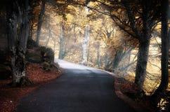 Route dans le bois Photo libre de droits