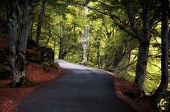 Route dans le bois Image stock