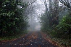 Route dans le brouillard Photo libre de droits