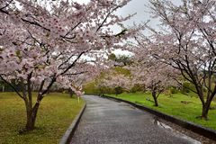Route dans le domaine de Sakura, près du parc de porcelaine de Tian, saga-ken, Japon Photos libres de droits