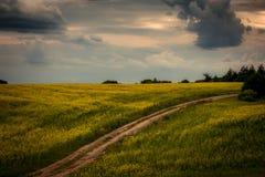 Route dans le domaine jaune image stock
