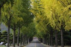 Route dans le jardin Photographie stock