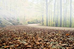 Route dans le parc Photo libre de droits
