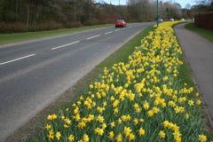 Route dans le printemps Photos stock