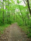 Route dans les bois Images libres de droits