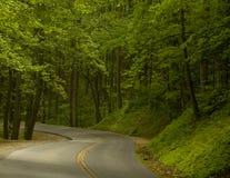 Route dans les bois Photos stock