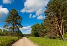 Route dans les bois. Image libre de droits
