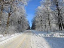 Route dans les grands arbres pendant l'hiver images stock
