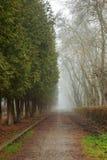Route dans mystérieux parc rampant et brumeux d'un peu photos stock