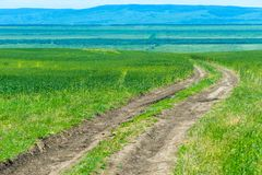 Route dans un domaine vert, beau paysage photographie stock libre de droits