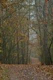 Route dans une forêt image stock