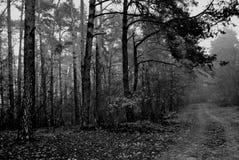 Route dans une forêt photographie stock