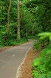 Route dans une forêt Photo libre de droits