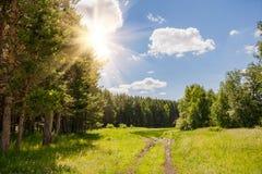 Route dans une forêt de pin Image stock