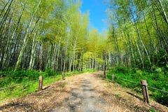 Route de bambou du Japon Image libre de droits