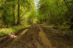 Route de boue dans la voie de forêt du camion de notation tous terrains photographie stock