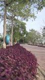 Route de brique rouge Photo libre de droits