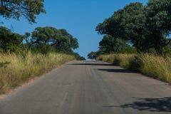 Route de Bush Image stock
