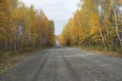 Route de Bush en automne Image libre de droits