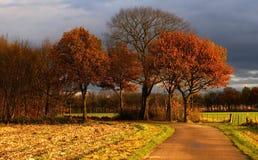 route de campagne à quelques arbres colorés gentils W d'automne Image stock