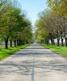 Route de campagne avec d'arbres le début le long - du ressort Photo libre de droits