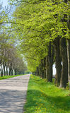 Route de campagne avec d'arbres le début le long - du ressort Images libres de droits