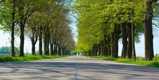 Route de campagne avec d'arbres le début le long - du ressort Photos stock