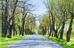 Route de campagne avec d'arbres le début le long - du ressort Photo stock