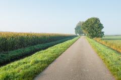 Route de campagne avec des arbres dans un arrangement rural Photos libres de droits