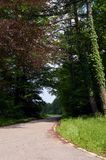 Route de campagne avec des arbres rouge et verts Photos stock