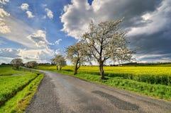 Route de campagne avec les cerisiers de floraison image stock