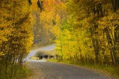 Route de campagne d'enroulement dans l'automne Photos stock