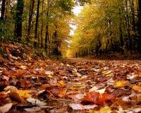 Route de campagne dans l'automne Photos libres de droits