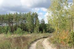 Route de campagne dans la forêt Photo stock