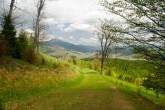 Route de campagne dans la forêt, paysage de montagne Carpathien, Ukraine image libre de droits