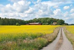 Route de campagne dans le pré jaune Images libres de droits